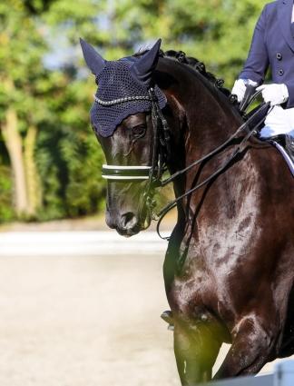 pferd-1