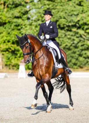 pferd-2